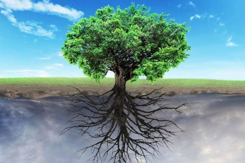 origine arbre de vie